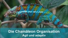 Die Chamäleon Organisation - agil und adaptiv, Teil 1: Mehr Bienenstock weniger Lege-Batterie